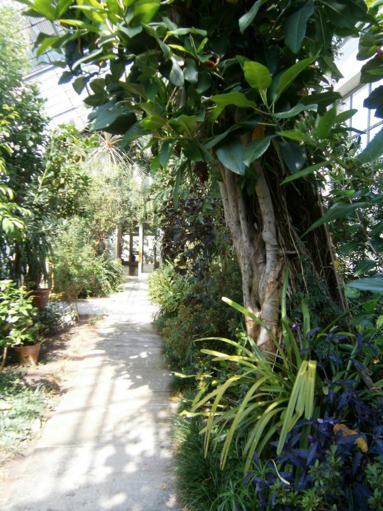 gradina-botanica-cluj-9
