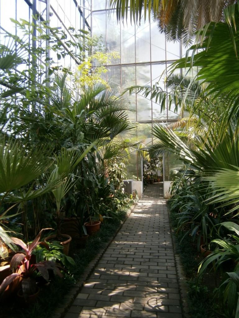gradina-botanica-cluj-sera