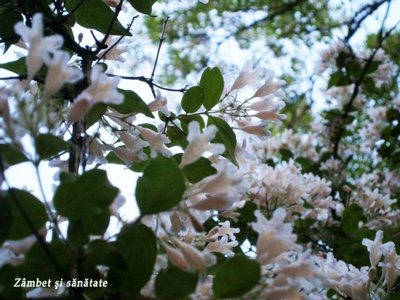 flori copaci gradina-botanica-bucuresti