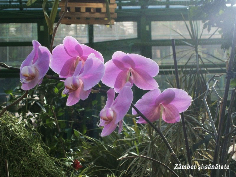 flori-gradina-botanica-bucuresti-1