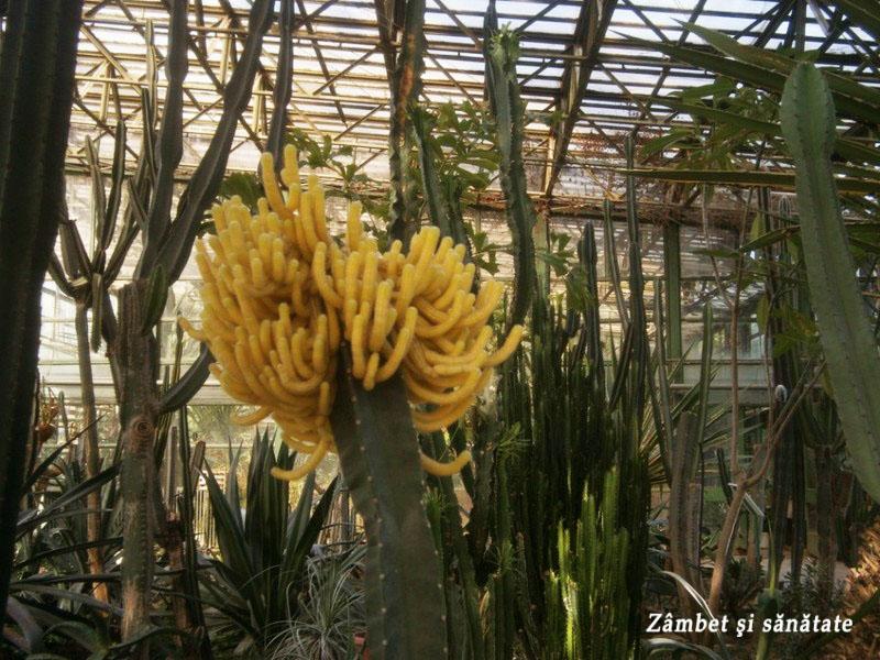 gradina-botanica-bucuresti cactusi sere