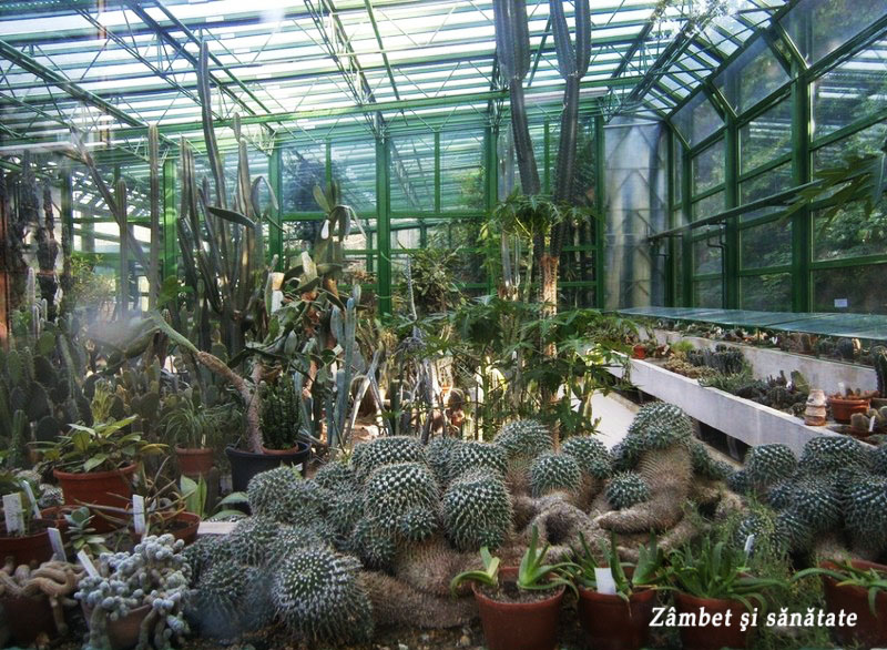 gradina-botanica-bucuresti cactusi
