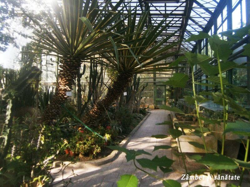gradina-botanica-bucuresti exotic