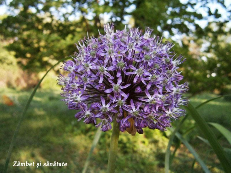 gradina-botanica-bucuresti floare