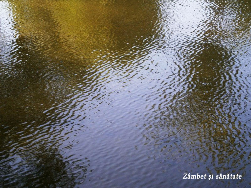 gradina-botanica-bucuresti-lac
