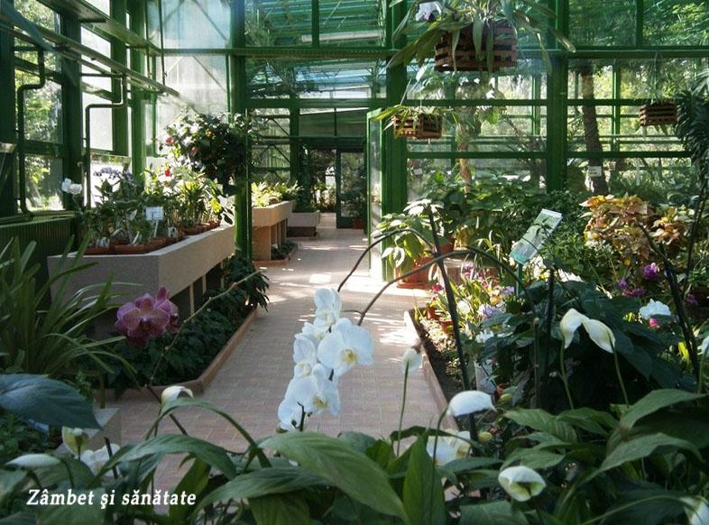 gradina-botanica-bucuresti-sere