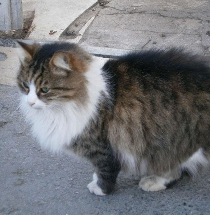 pisica-istanbul
