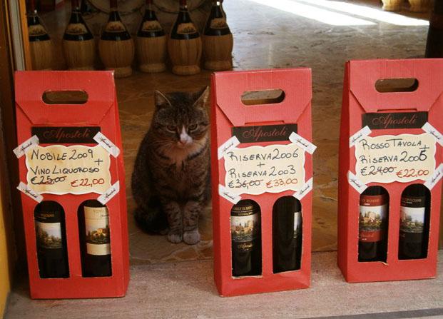 vin-de-montepulciano-si-un-pisic