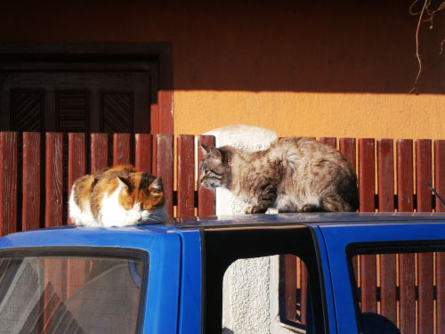 pisici-la-soare-tulcea