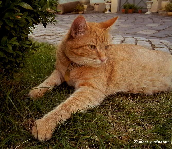 pisic-la-Brukenthal