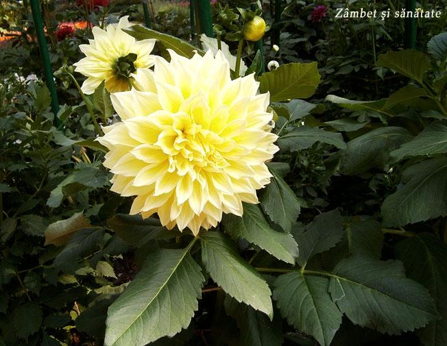 floare-gradina-botanica-varsovia