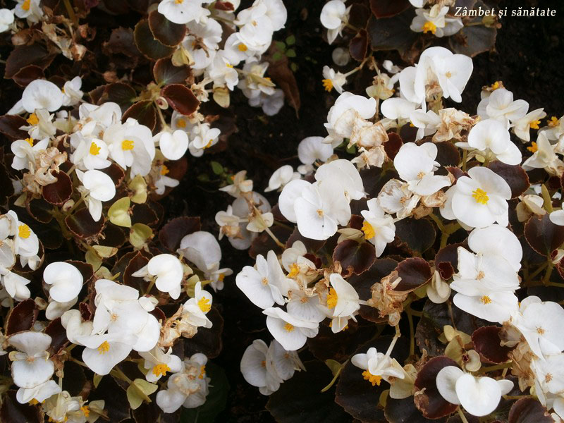 flori-gradina-botanica-varsovia
