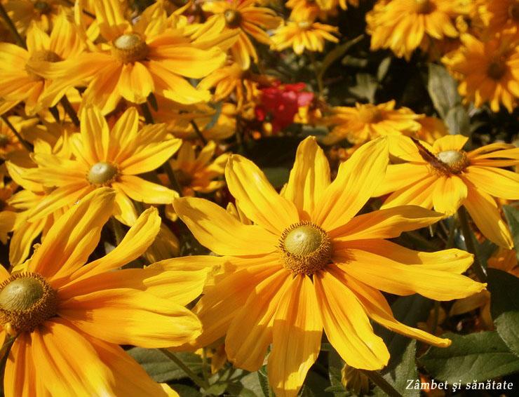 gradina-botanica-varsovia-flori-galbene