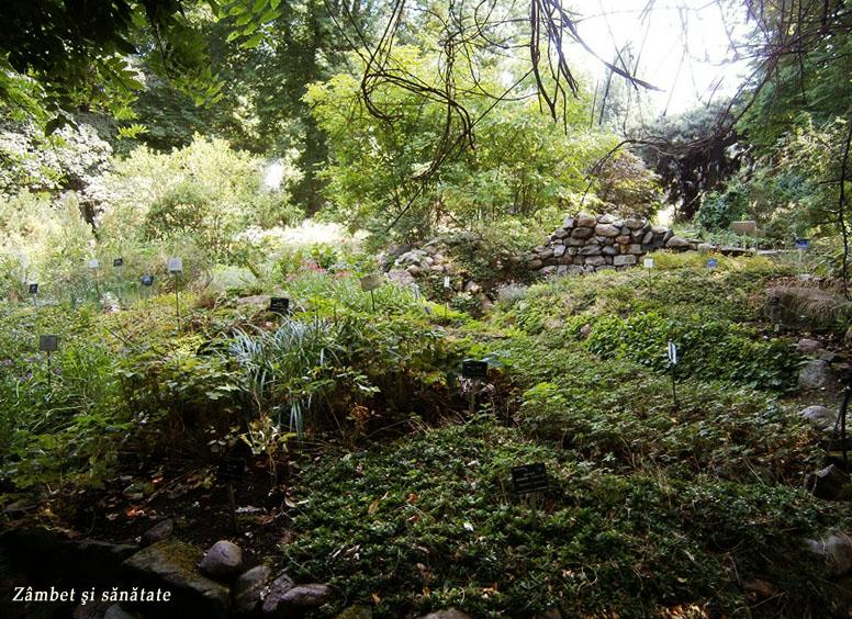 peisaj-gradina-botanica-varsovia