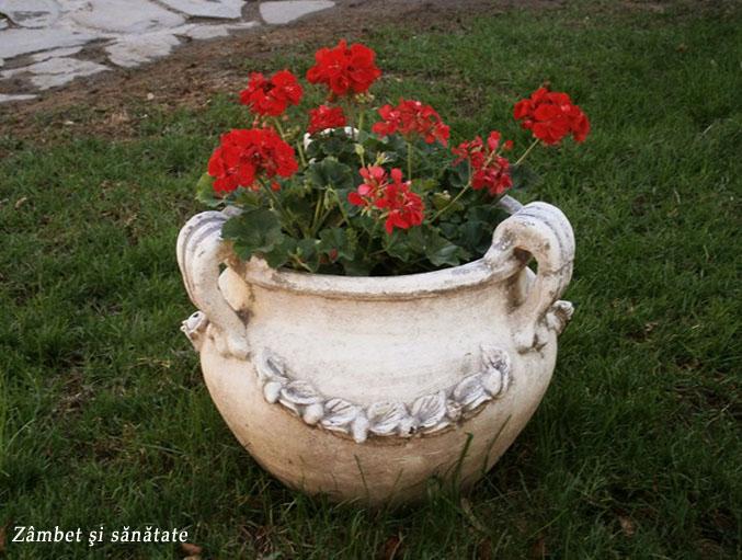 flori-si-verdeata
