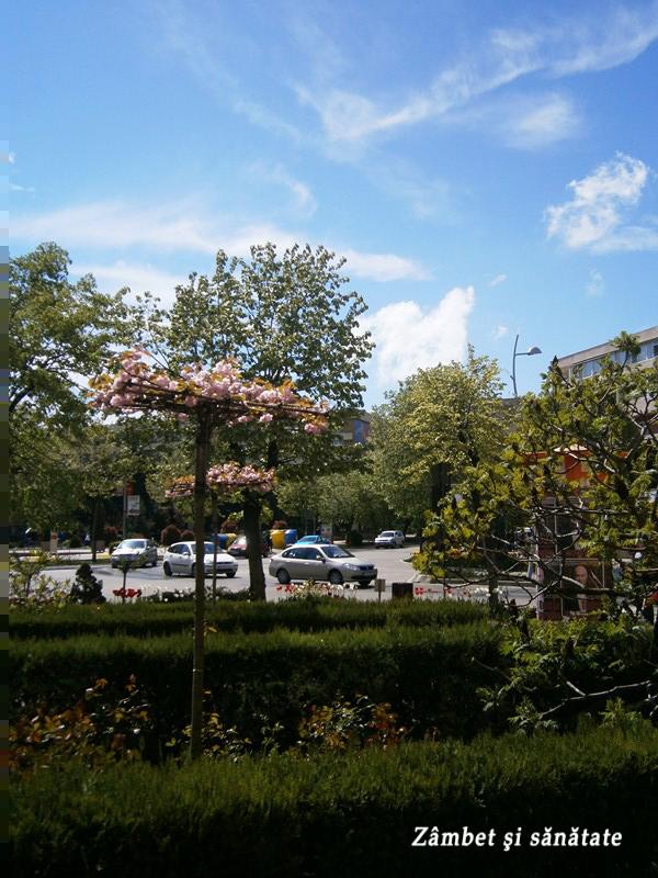 copaci-infloriti-in-tulcea