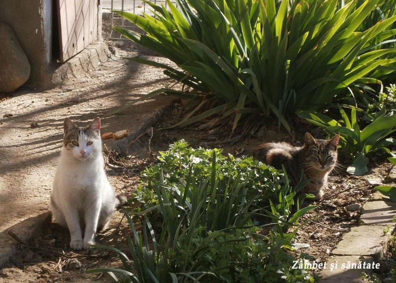 pisici-in-gradina