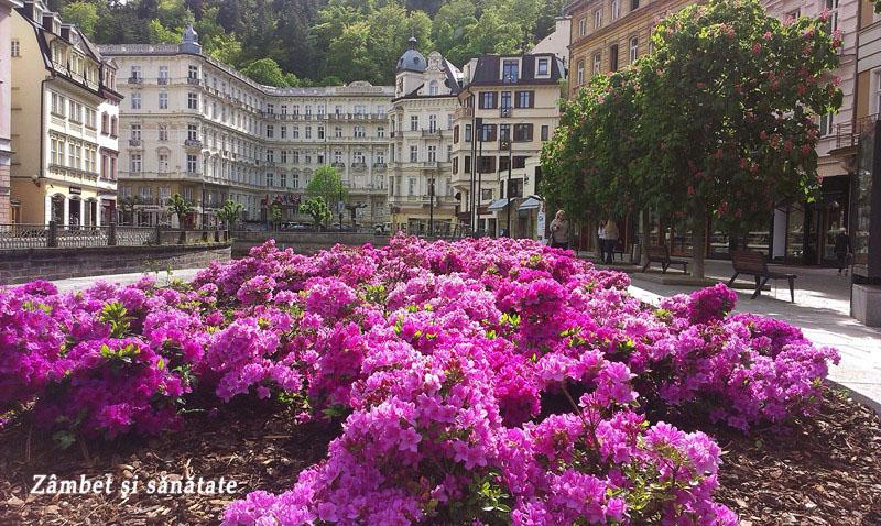 Karlovy-Vary-flori