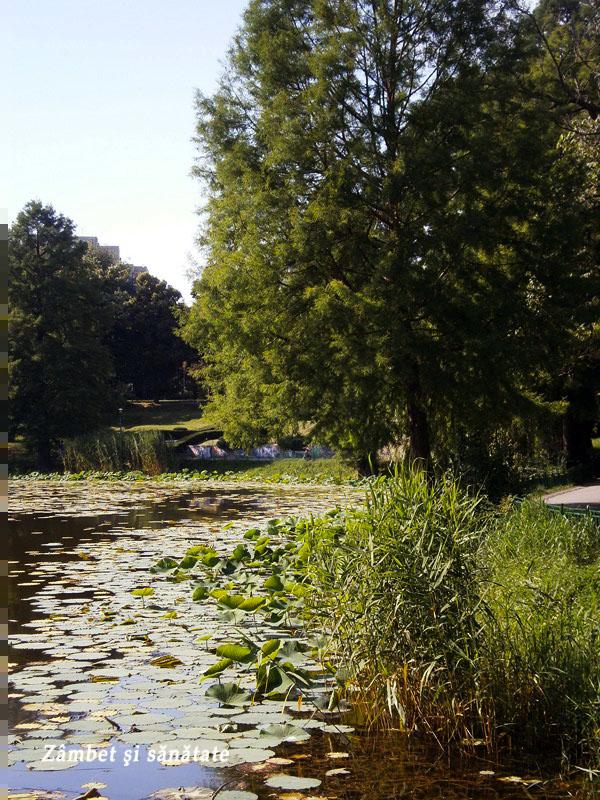 lac-parcul-circului-Bucuresti