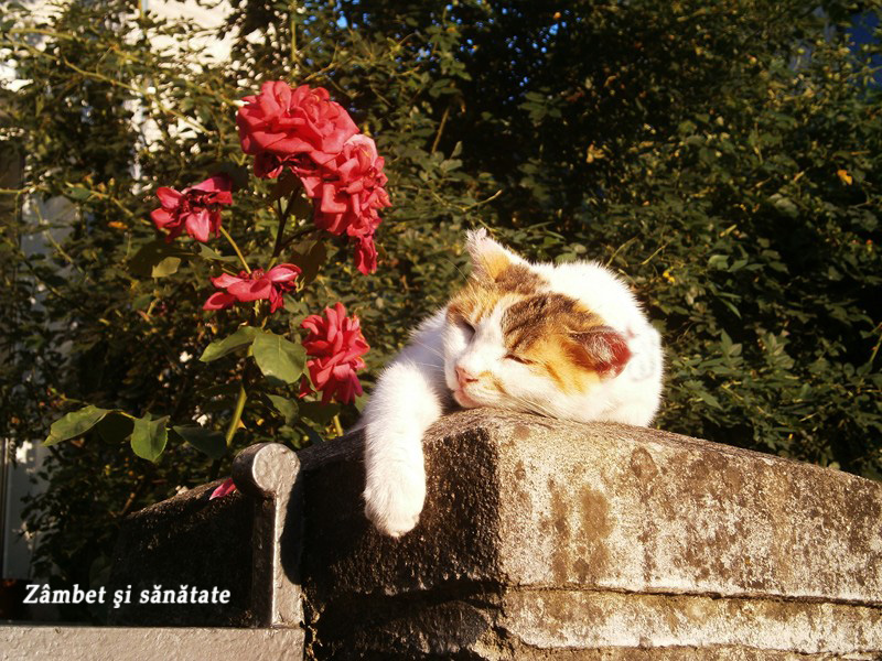 pisic-pe-aleea-suter