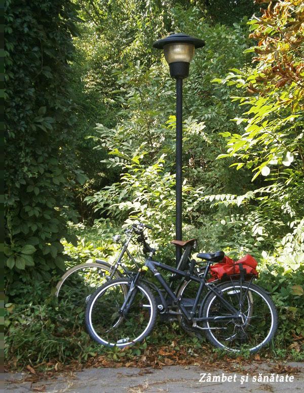 creative-est-gradina-botanica-doua-biciclete
