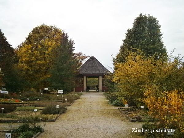 alee-gradina-botanica-munchen