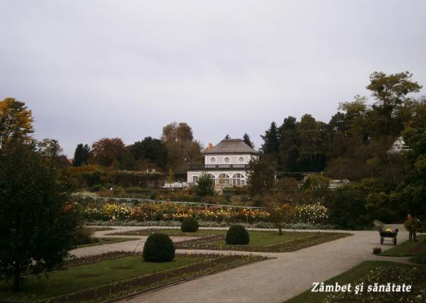cafenea-gradina-botanica-munchen