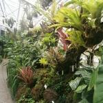 gradina-botanica-munchen-sere