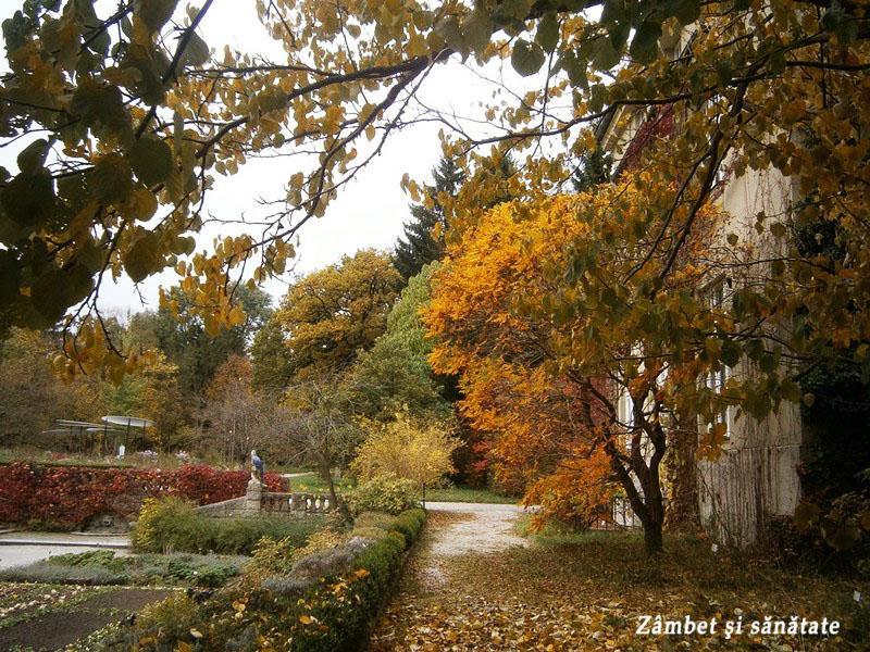 gradina-botanica-palatul-nymphenburg-munchen