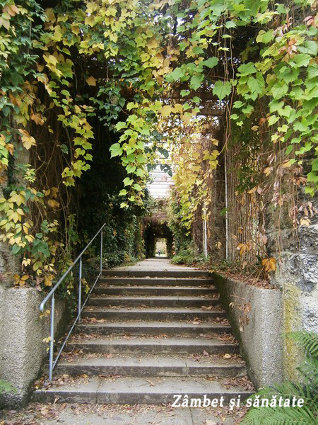 scari-gradina-botanica-munchen.