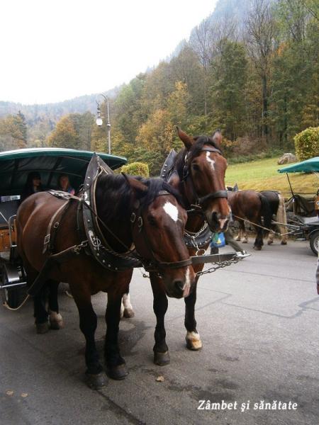 cai spre castelul Neuschwanstein