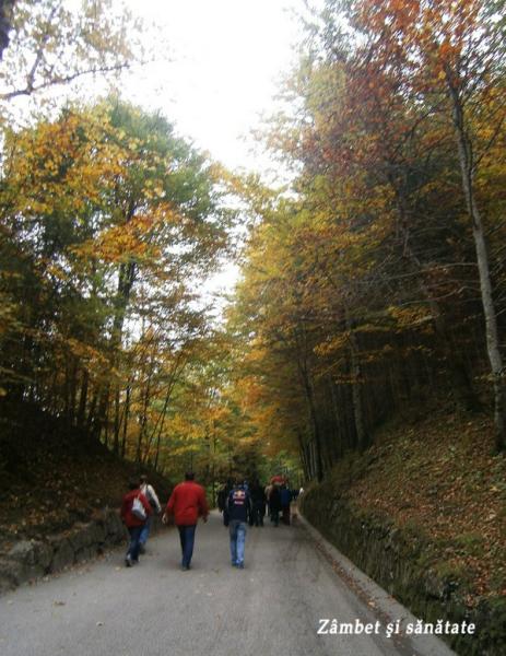 castelul-Nedrumul-spre-uschwanstein