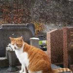 cimitirul-montmartre-paris-motan