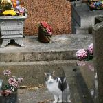 cimitirul-montmartre-paris-pisic