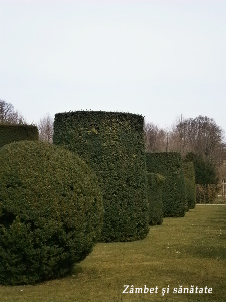 gradina-schonbrunn