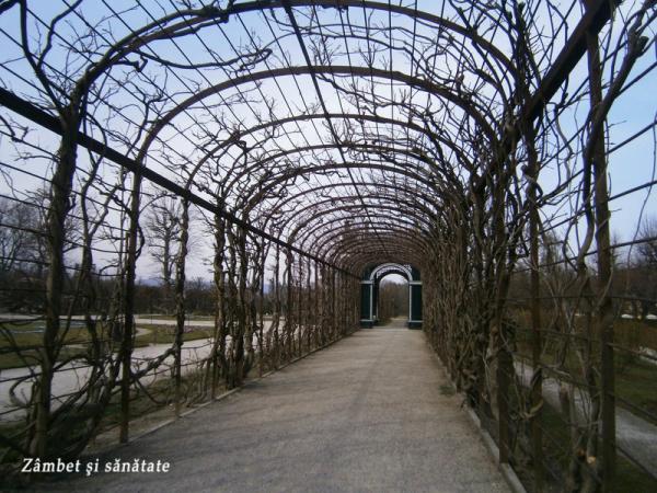 palatul-schonbrunn-spre-gradina