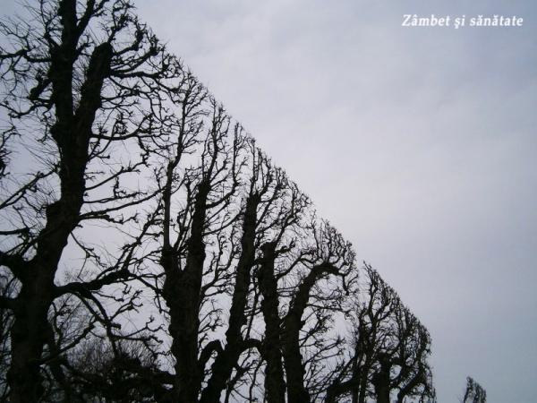 schonbrunn-copaci