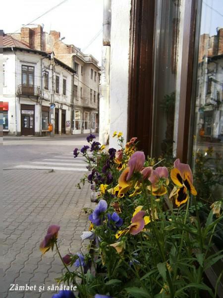 Campulung-Muscel-flori