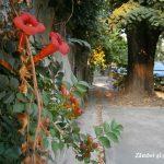 Iniţiere în fotografia urbană şi o plimbare foto prin cartierul Cotroceni