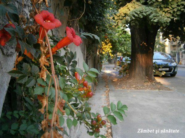 cartierul-cotroceni-strada