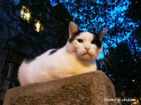 pisic-cartierul-cotroceni