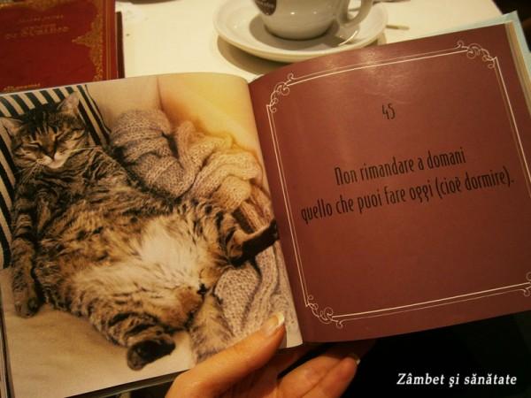 gattosofia-caffe-letterario-ravenna