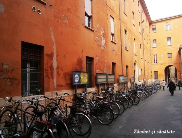 multe-biciclete-in-bologna