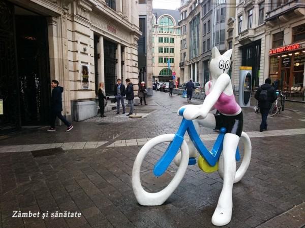 pisica bicicleta bruxelles