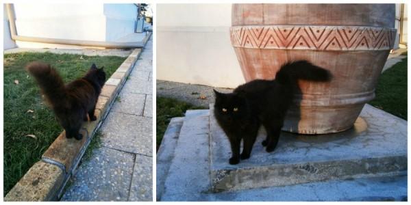 pisica la domeniul manasia