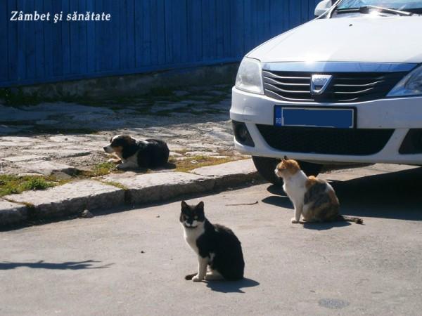 pisici-tulcea