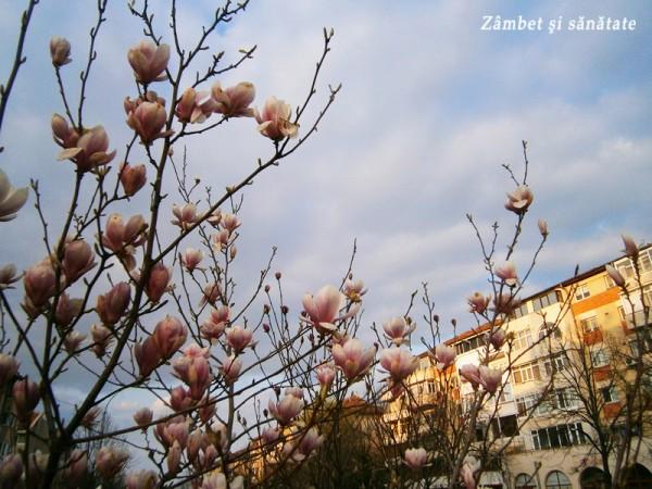 tulcea-copaci-infloriti