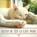 Lecția de zen la Cafe Miau