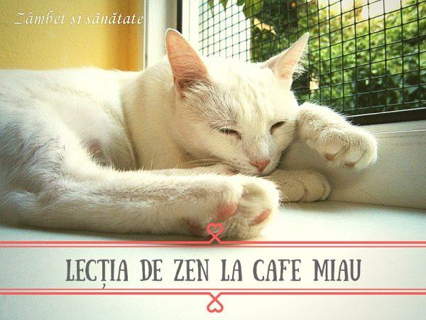 cafeneaua cu pisici bucuresti miau