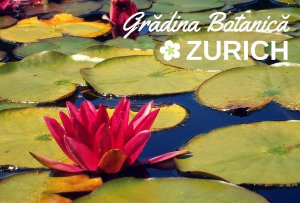 Gradina Botanica Zurich